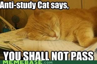 cat,finals,gandalf,Memes,study