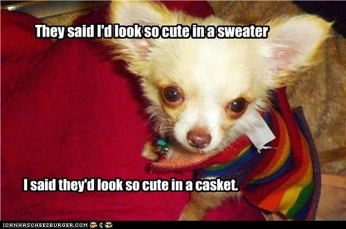 casket,chihuahua,clothes,clothing,sweater