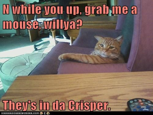 N while you up, grab me a mouse, willya?  They's in da Crisper.