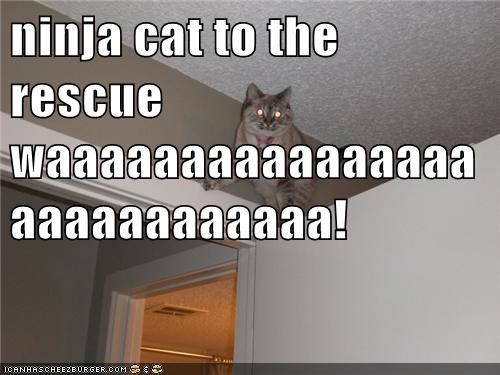 ninja cat to the rescue waaaaaaaaaaaaaaaaaaaaaaaaaaaa!