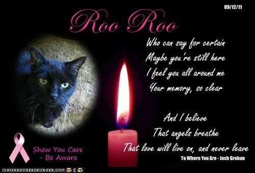 A Special Candle For RooRoo - AllCatsLoved's Beautiful Baby