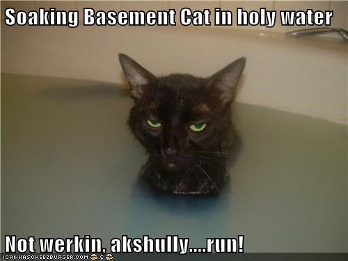 Soaking Basement Cat in holy water  Not werkin, akshully....run!