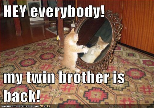 announcement,back,brother,caption,captioned,cat,confused,everybody,happy,Hey,kitten,mirror,reflection,return,twin