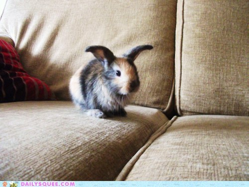 Let the Bunbun Match the Couch