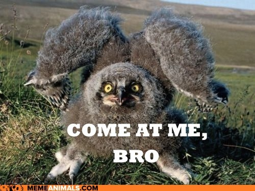 birds,captions,come at me bro,owls