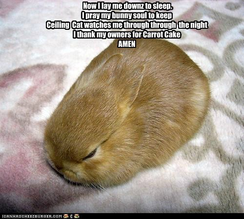 Now I lay me downz to sleep. I pray my bunny soul to keep Ceiling  Cat watches me through through  the night I thank my owners for Carrot Cake AMEN