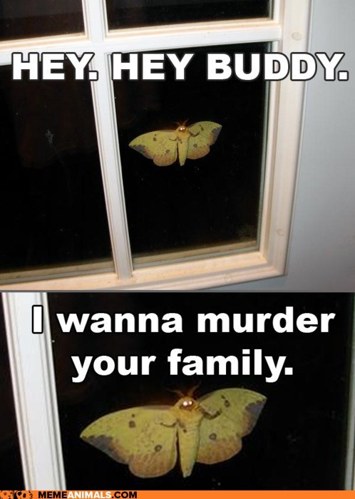 captions,creepy,family,Hall of Fame,huge,moths,murder,omg,scary,windows