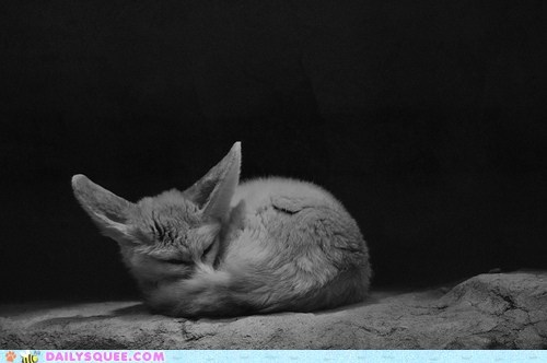 Do Fennecs Dream of Electric Squee?