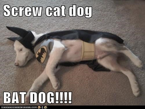 Screw cat dog  BAT DOG!!!!