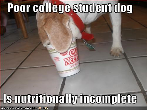 Poor college student dog  Is nutritionally incomplete