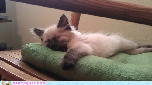 Let sleeping kittens lie.....