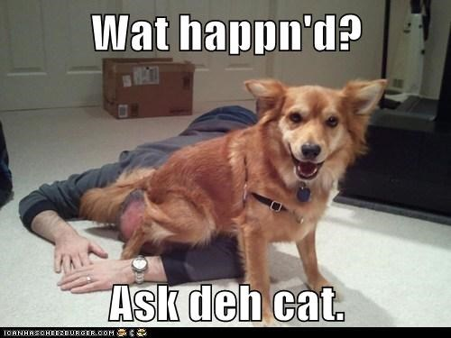 Wat happn'd?  Ask deh cat.