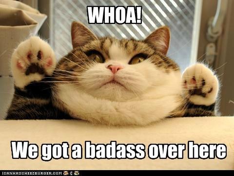 Neil DerpGrasse Turrrson's Cat