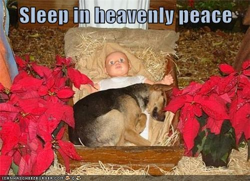best of the week,christmas,christmas carol,Christmas Carols,german shepherd,Hall of Fame,manger,silent night