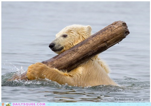acting like animals,baby,cub,holding,log,parody,polar bear,rewrite,rowing,song