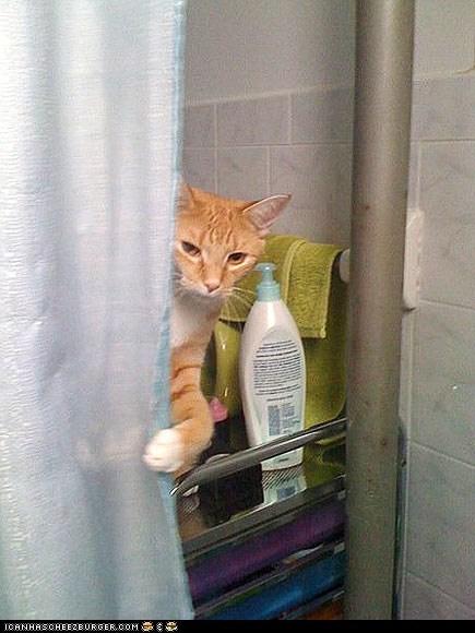 around the interwebs,baths,bathtubs,people pets,showers,tubs