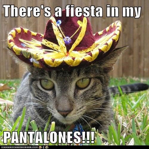 There's a fiesta in my  PANTALONES!!!