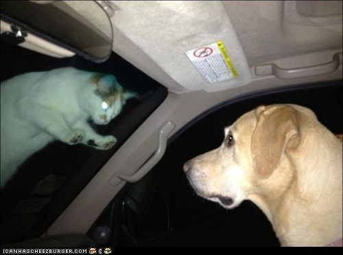 cars,dogs,goggies,goggies r owr friends,horror,Interspecies Love,laser eyes,scary