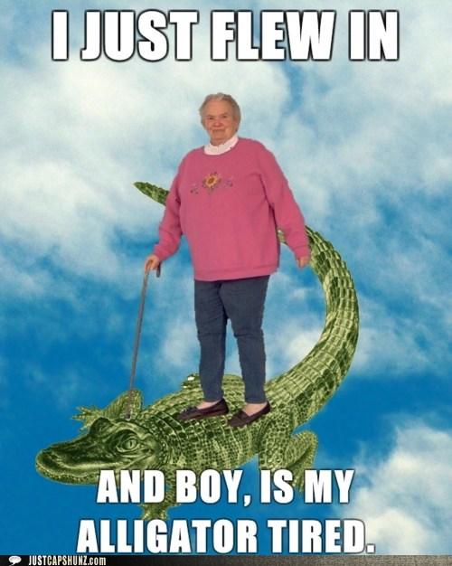 alligator,grandma,grandmother,just flew in,non sequitur