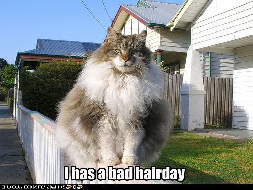 I has a bad hairday