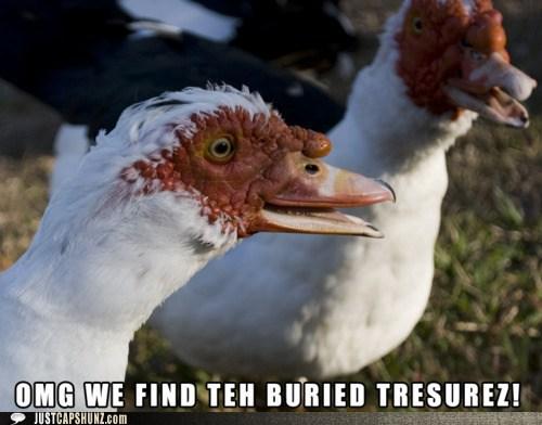 animals,burried treasure,geese,happy,treasure