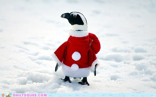 The Twelve Squees of Christmas: Greetings From the South Pole!