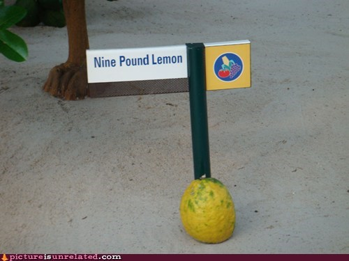 That's One Heavy Lemon