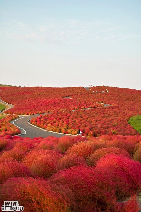 Mother Nature FTW: Kochia Hill