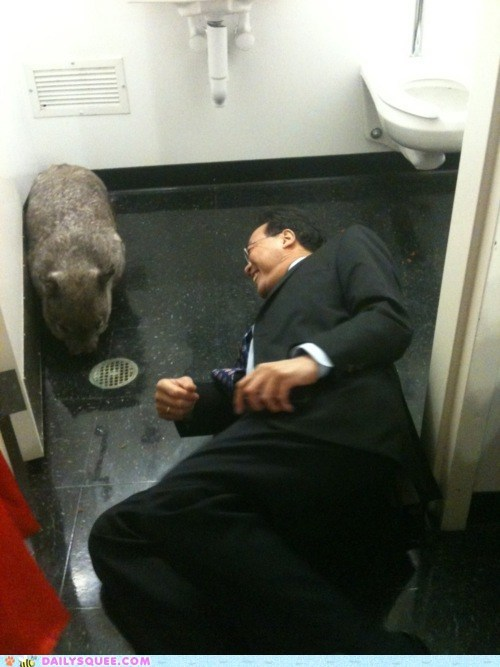 Acting Like Animals: Yo-Yo Ma on the Floor of a Bathroom With a Wombat
