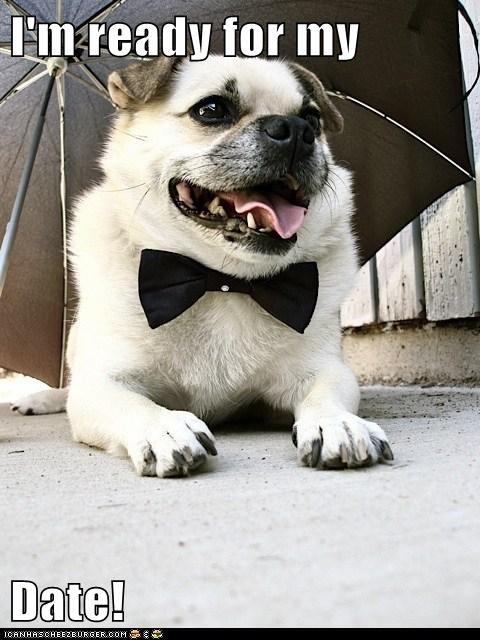 bowtie,date,dogs,i has a hotdog,pug,umbrella