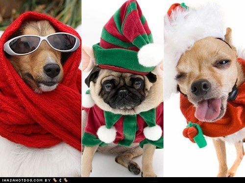 20 Awesome Christmas Goggies