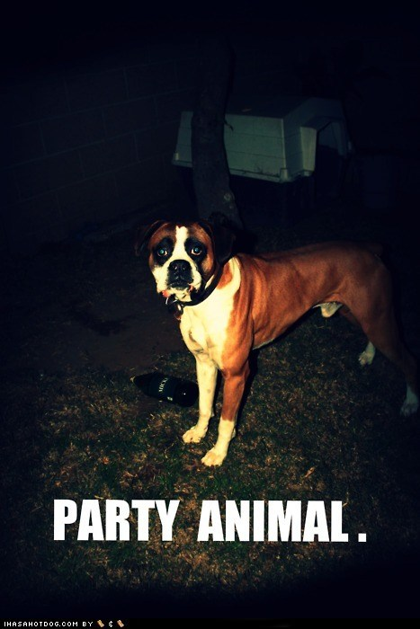 beer,booze,boxer,Party,party animal,party on,partying