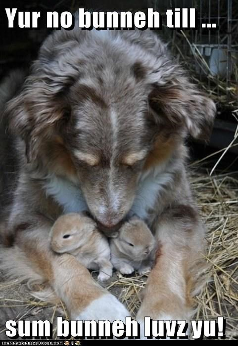 adoption,australian shepherd,bunnies,bunny,interspecies,love