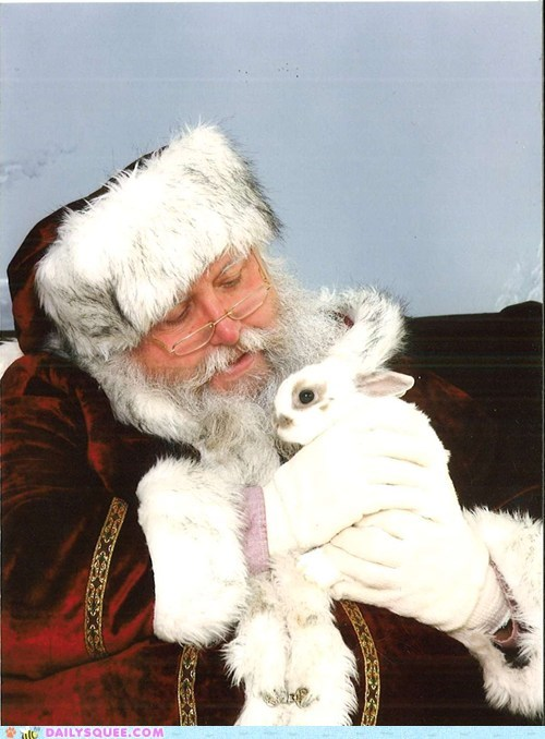 bunny,first,meeting,rabbit,reader squees,santa,santa claus,visit