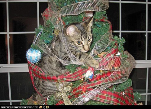 advent calendar,christmas,christmas tree,cyoot kitteh of teh day,decorations,disaster,holidays,ribbons,stuck
