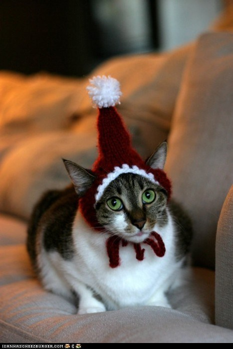 Advent Kitteh of teh Day: Doez U Liek Mah Winter Hat?