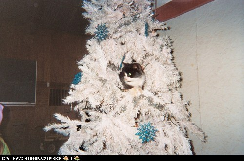 Advent Kitteh of teh Day: Ur Tree Iz 2 White; It Needz Moar Colorz.  Ai Will Doez 4 U!