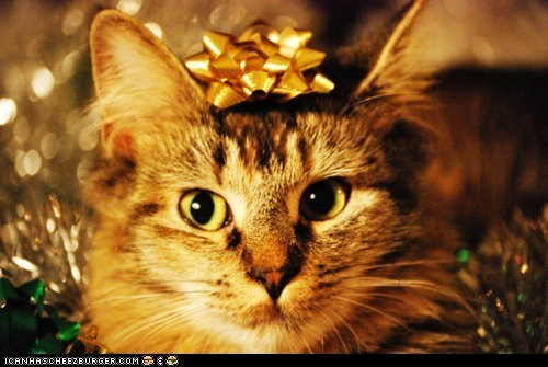 Advent Kitteh of teh Day: Iz Ur Catmas Prezent.  Deal Wiff It.