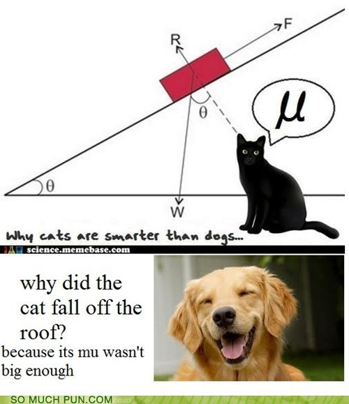 accident,answer,cat,dogs,FAIL,fall,falling,Hall of Fame,insufficient,mu,physics,question,Reframe,roof