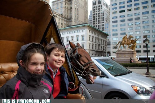 Animal Bomb,horse,Horse and Carriage,kids,mr ed,street