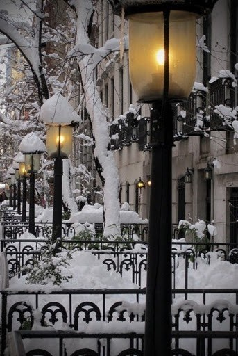 Snow Covered Lampposts