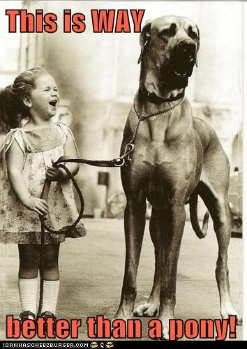better than a pony,black and white,child,girl,great dane,i-dont-need-no-stinkin-pony,kid,laugh,laughing,vintage