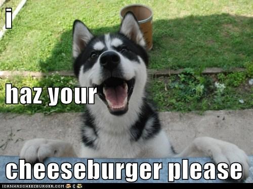 i haz your cheeseburger please