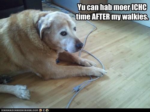 going for a walk,labrador retriever,no,no more,stop,unplug,unplugged,walk,walkies