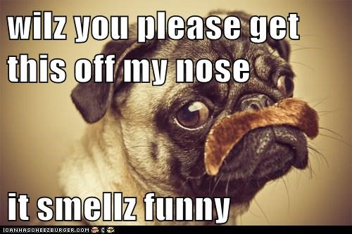 wilz you please get this off my nose  it smellz funny
