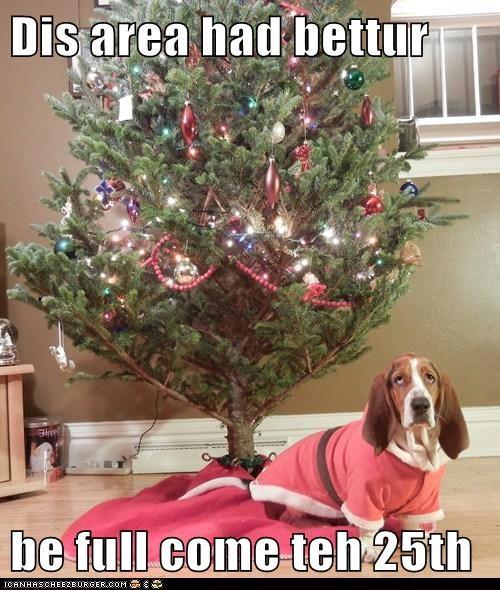 basset hound,christmas,christmas presents,christmas tree,merry christmas
