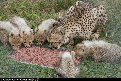 Caption Contest: Name One of the National Zoo's Cheetah Cubs!