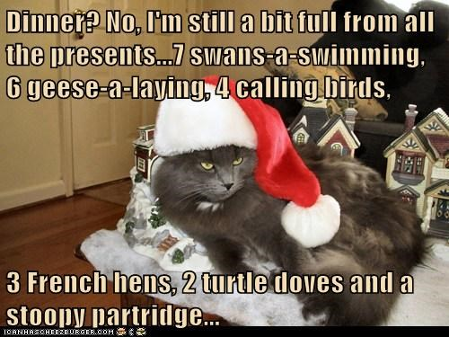 Dinner? No, I'm still a bit full from all the presents...7 swans-a-swimming, 6 geese-a-laying, 4 calling birds,   3 French hens, 2 turtle doves and a stoopy partridge...
