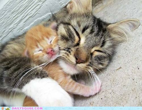 baby,cat,Cats,cuddling,endearing,family,Hall of Fame,kitten,love,mother,overprotective,possessive,sleeping