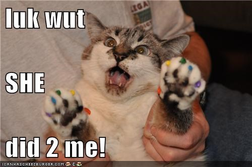 angry upset,animals,best of the week,caption,captioned,cat,Cats,claws,colors,fingernail polish,Hall of Fame,I Can Has Cheezburger,look,manicure,nail polish,nails,painted nails,paws,rainbows